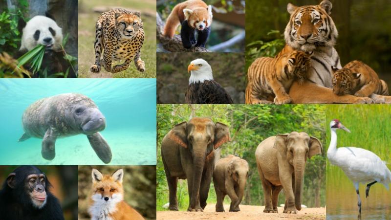 endangered_species
